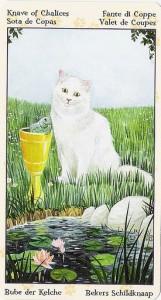 Паж Кубков Таро Языческих Кошек (Tarot of Pagan Cats)