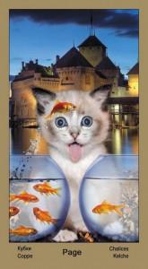 "Паж Масть Кубков Таро ""Катавасия"" (Tarot Cat-A-Vasya)"