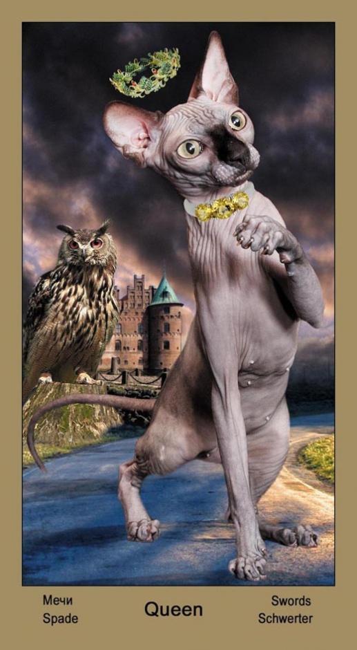 "Королева Масть Мечей Таро ""Катавасия"" (Tarot Cat-A-Vasya)"