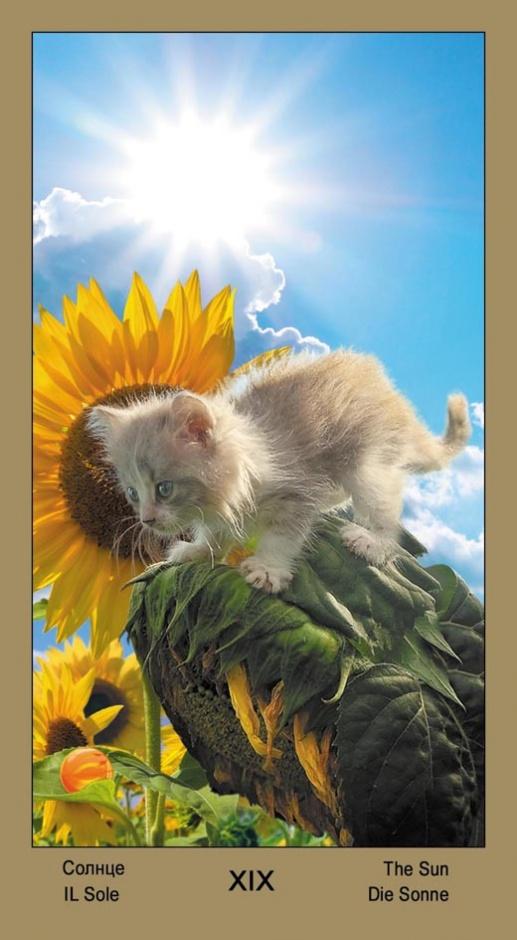 """19 Солнце Таро """"Катавасия"""" (Tarot Cat-A-Vasya)"""