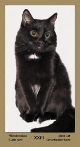 """23 Дополнительная карта Черная Кошка Таро """"Катавасия"""" (Tarot Cat-A-Vasya)"""