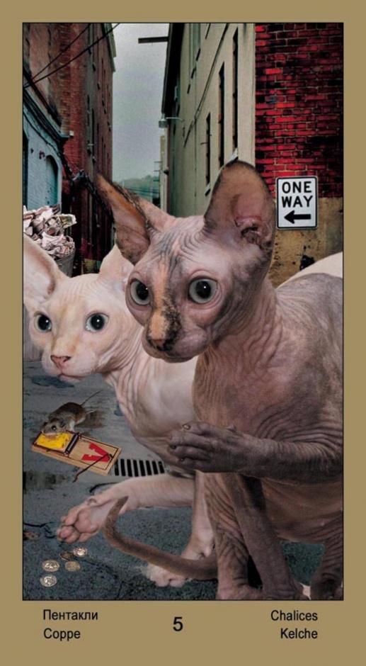 """5 Масть Пентаклей Таро """"Катавасия"""" (Tarot Cat-A-Vasya)"""