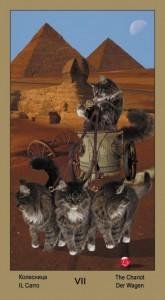 """7 Колесница Таро """"Катавасия"""" (Tarot Cat-A-Vasya)"""
