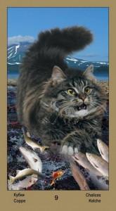 """9 Масть Кубков Таро """"Катавасия"""" (Tarot Cat-A-Vasya)"""